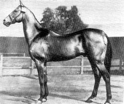 akhal teke caballo de 1909