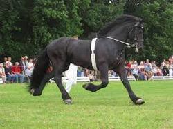 ponis asturias