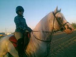 caballo arabe caracteristicas