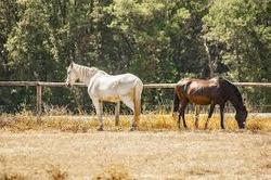 caballo asteca