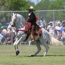 turcomano caballo