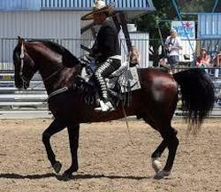 caballos astecas