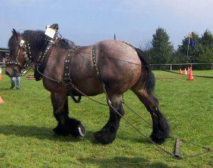 caballo de ardenner