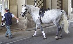 caballos lipizanos origen