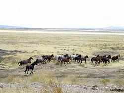 Mustang en Utah