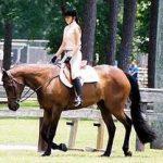 ardenner horse