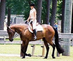 Quarter en equitacion