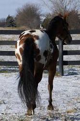 caballo azteca origen