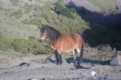 tarpan caballo