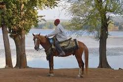 berberisco caballo