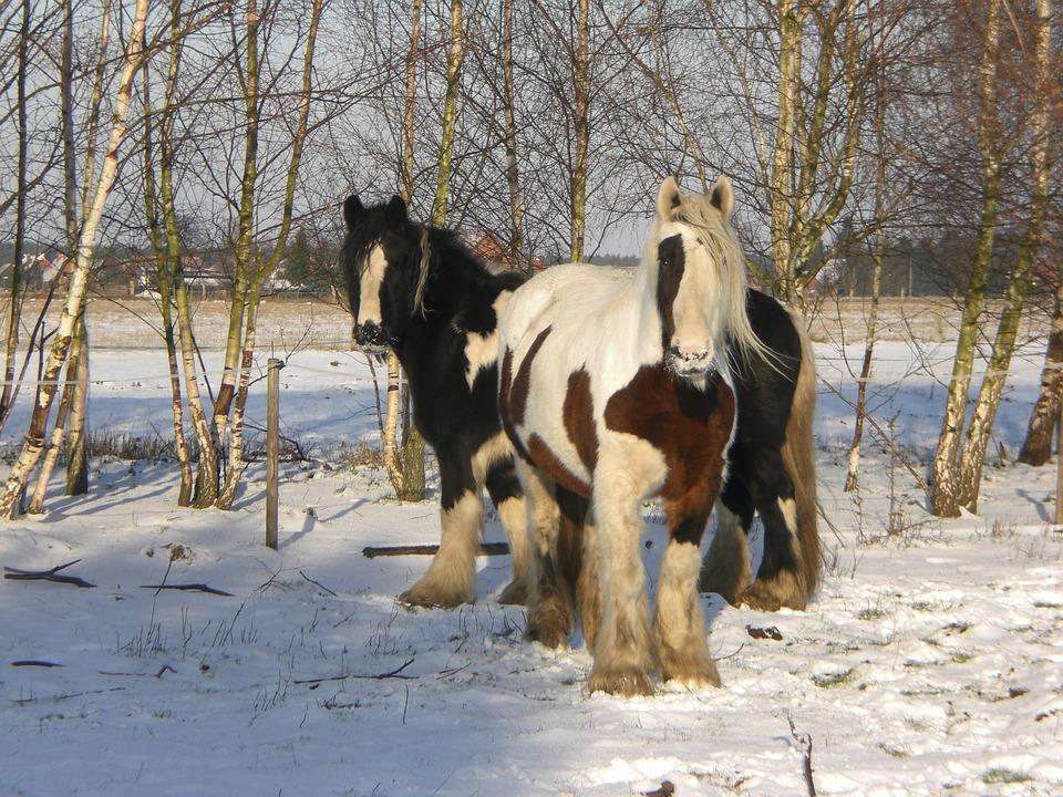 tinker caballo