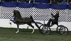 hackney caballo