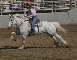 origen caballo percheron