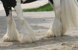plumas en la pierna trasera
