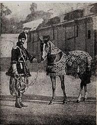 Caballo de Karabaj entregado a la gran duquesa Xenia Alexandrovna el 1 de mayo de 1892